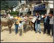 Mostra zootecnica di Serina 2009